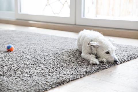 Một tấm thảm cho thú cưng là một gợi ý hay